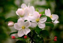 Ghidul plantelor medicinale de la A la Z