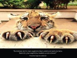 Proverbul tigrului siberian