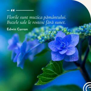 Florile
